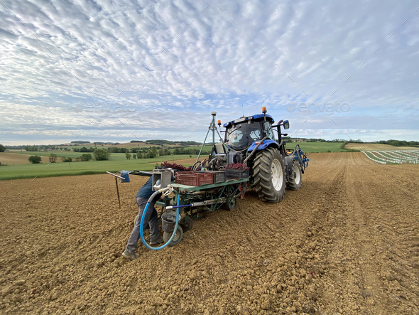 farmer and tractor for planting grape - Stock Photo - Images