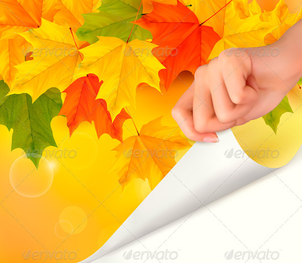 Autumn background with color leaves and woman hand - Flowers & Plants Nature