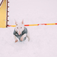 Funny Dog Young English Bull Terrier Bullterrier Puppy Dog Jumping Through Barrier In Snow Snowdrift - PhotoDune Item for Sale