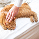 Cute ginger cat sleeps on the bed - PhotoDune Item for Sale
