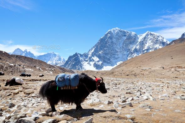 Himalaya - Stock Photo - Images