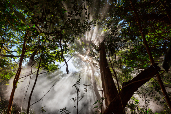 Sunny beams - Stock Photo - Images