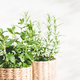 Mint and Rosemary Herbs. - PhotoDune Item for Sale