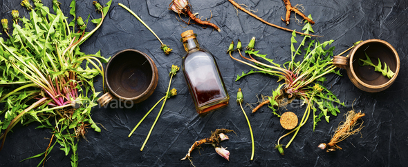 Dandelion root in herbal medicine - Stock Photo - Images