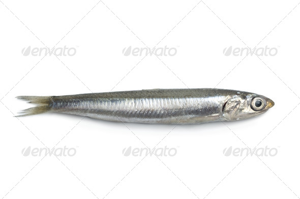 Whole single fresh raw European anchovy - Stock Photo - Images