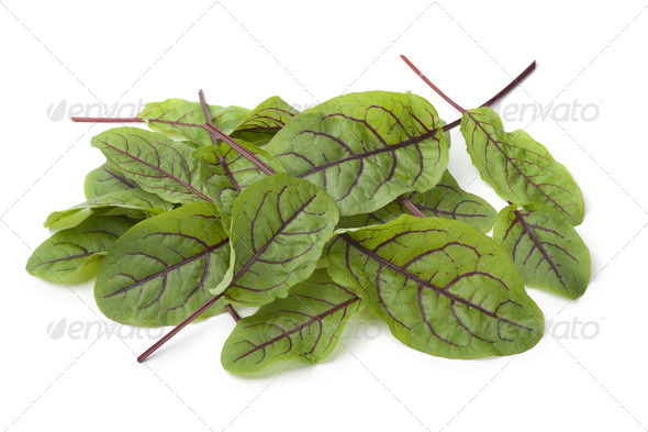 Red veined sorrel leaves - Stock Photo - Images