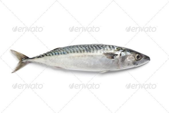 Whole single fresh mackerel fish - Stock Photo - Images