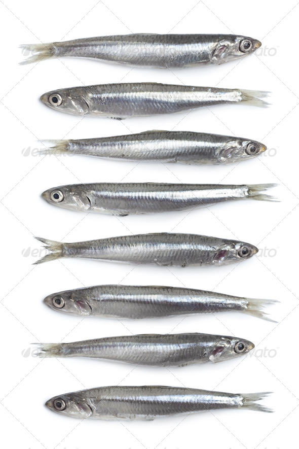 Whole fresh raw European anchovy in a row - Stock Photo - Images