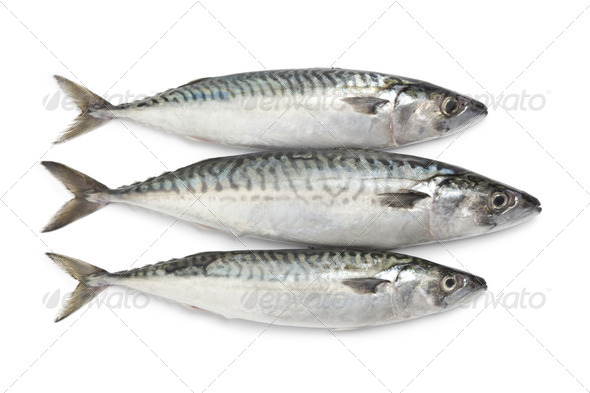 Fresh mackerel fishes - Stock Photo - Images