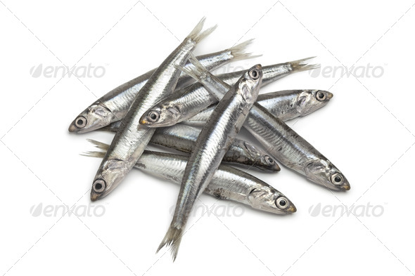 Fresh raw European anchovy - Stock Photo - Images