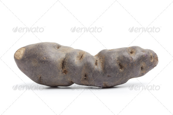 Whole single fresh Vitelotte noir potato - Stock Photo - Images