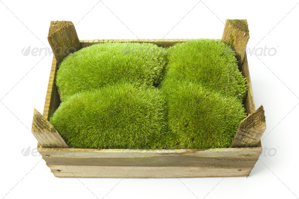 Green moss in a wooden box - Stock Photo - Images