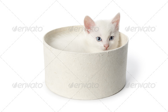Cute white kitten with blue eyes in a box - Stock Photo - Images