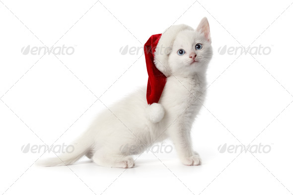 Cute white kitten with blue eyes and Christmas hat - Stock Photo - Images
