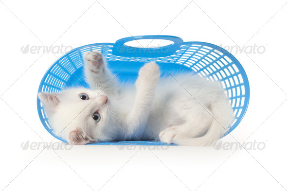 Cute white kitten with blue eyes playing in a blue plastic bask - Stock Photo - Images