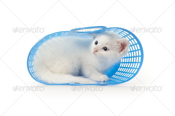 Cute white kitten with blue eyes hiding in a blue plastic baske - Stock Photo - Images