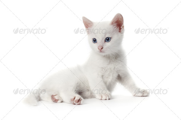 Cute white kitten with blue eyes - Stock Photo - Images
