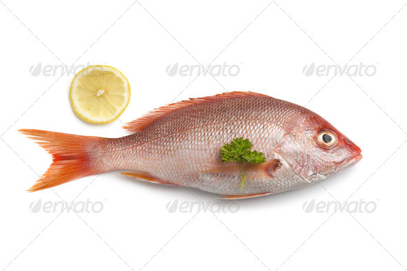 Whole fresh red snapper - Stock Photo - Images
