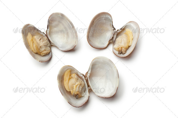 Fresh cooked clams - Stock Photo - Images
