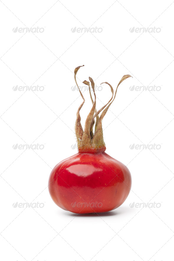 Whole fresh red rose hip - Stock Photo - Images