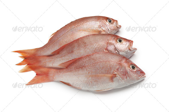 Fresh red snappers - Stock Photo - Images