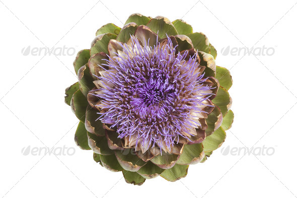 Purple artichoke flower seen from above - Stock Photo - Images