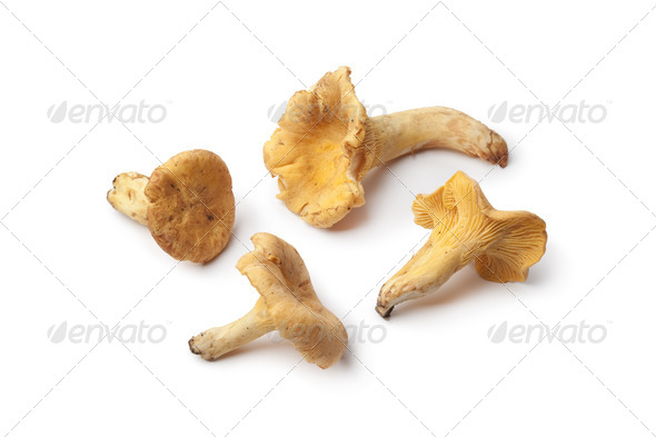 Fresh yellow chanterelles - Stock Photo - Images