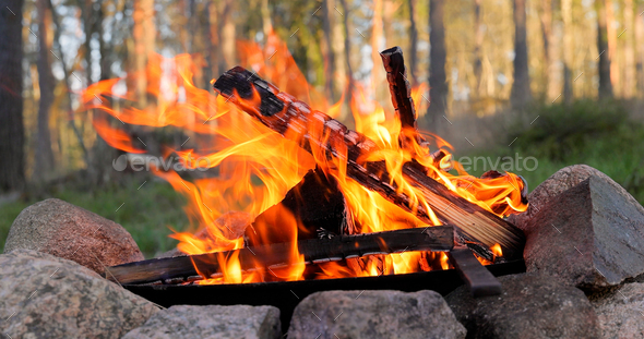 Burning Campfire in the forest - Stock Photo - Images