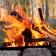 Burning Campfire in the forest - PhotoDune Item for Sale