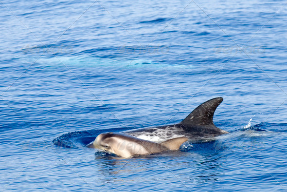 Young dolphin - Stock Photo - Images