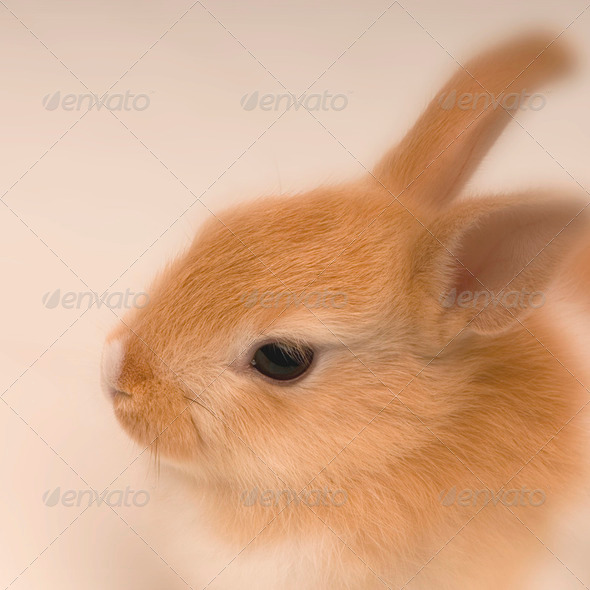 rabbit looking straight ahead - Stock Photo - Images