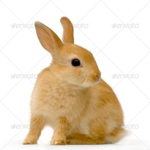 Spy rabbit - Stock Photo - Images