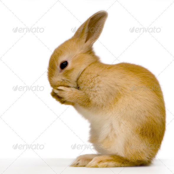 shy rabbit - Stock Photo - Images