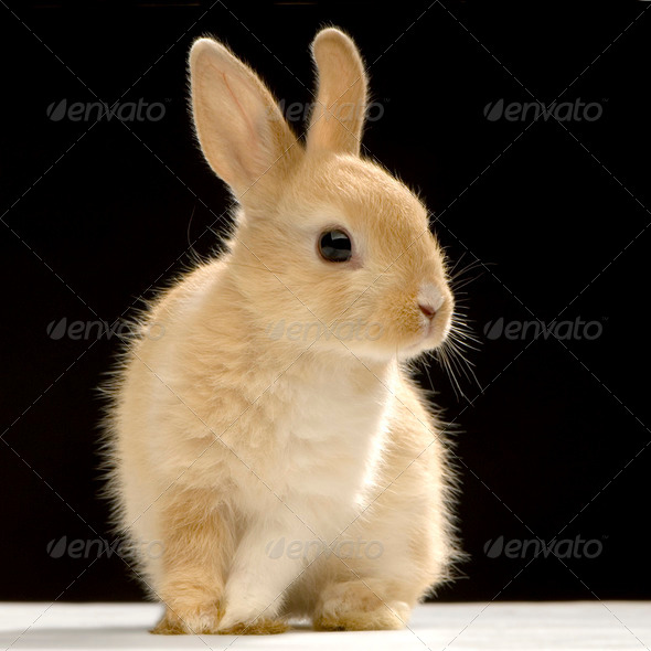 Rabbit - Stock Photo - Images