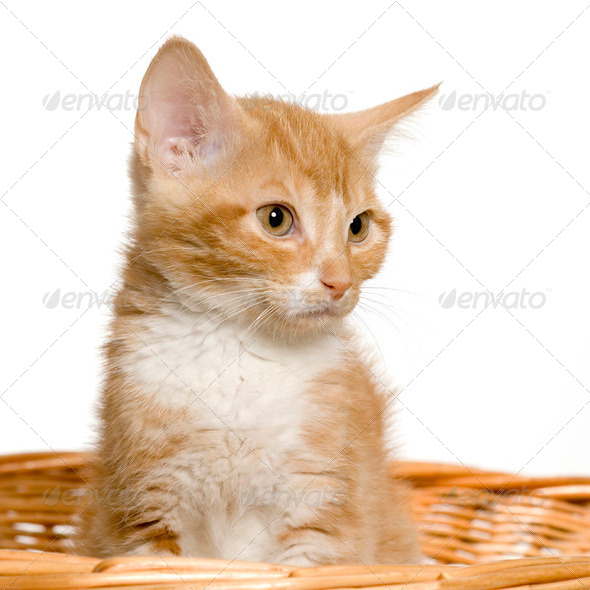 Pussy cat - Stock Photo - Images