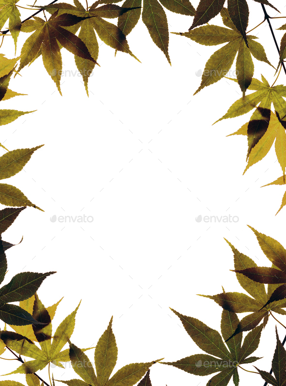 Autumn leaves isolated on white - Stock Photo - Images
