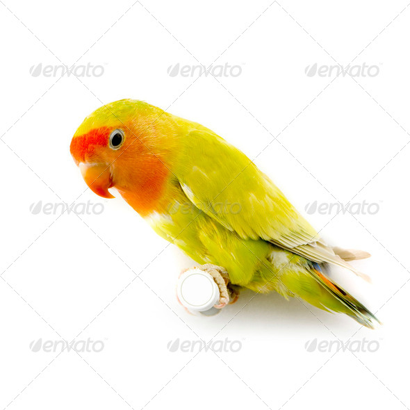 love bird - Stock Photo - Images