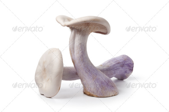 Pied bleu edible mushrooms - Stock Photo - Images