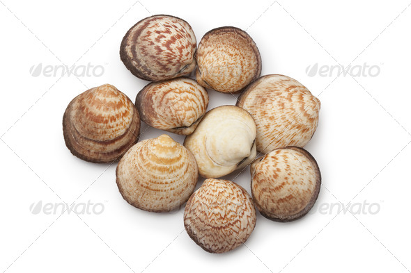 Fresh Dog cockles - Stock Photo - Images