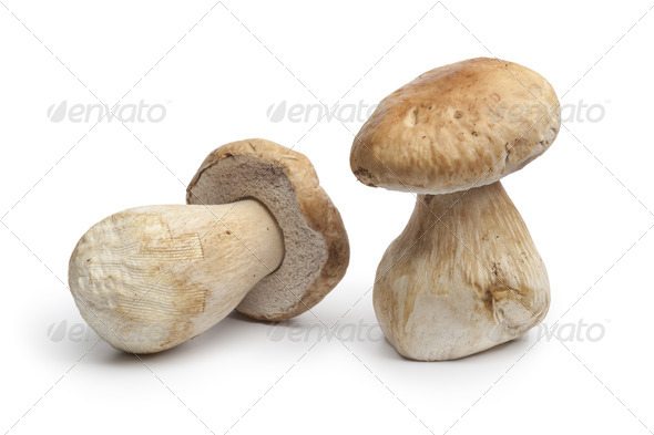 Whole fresh porcini mushrooms - Stock Photo - Images