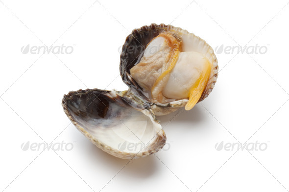 Whole single fresh cooked cockle - Stock Photo - Images