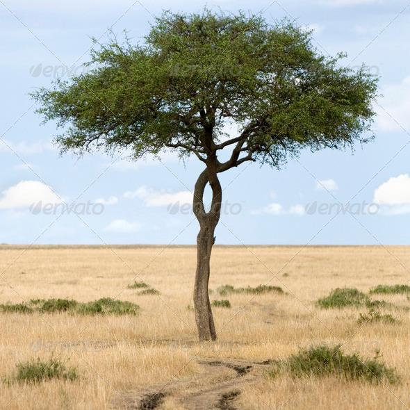 Masai mara - Stock Photo - Images