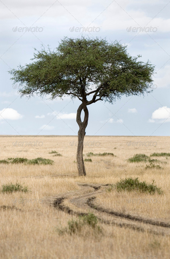 Masai mara - Stock Photo - Images