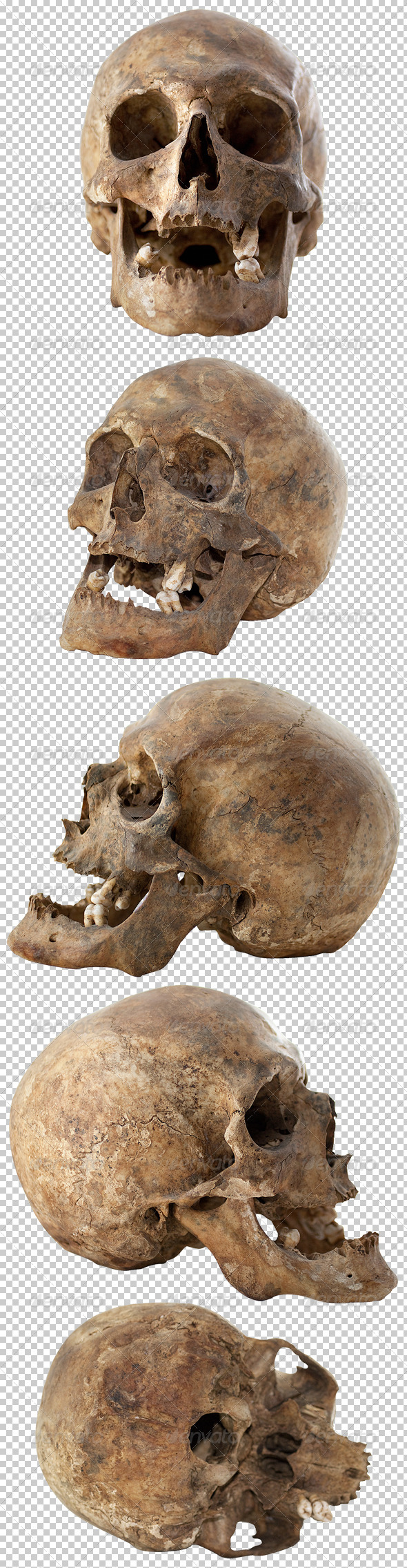Five Human Skulls Set - Miscellaneous Isolated Objects