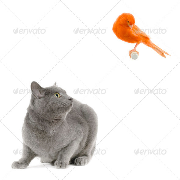 the bird and the cat - Stock Photo - Images