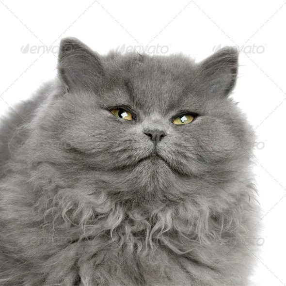 persian - Stock Photo - Images