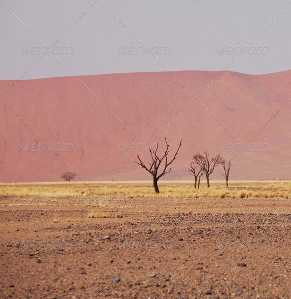 Namib - Stock Photo - Images