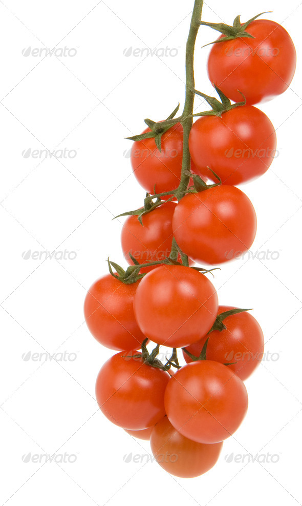 red tomato branch isolated on white - Stock Photo - Images