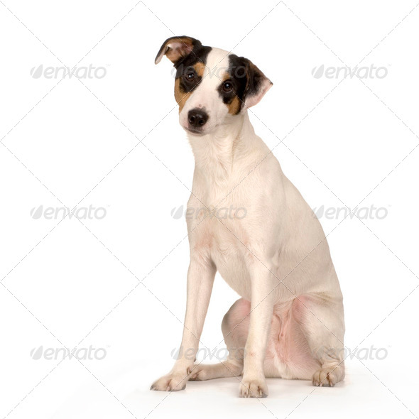 Bastard - Stock Photo - Images