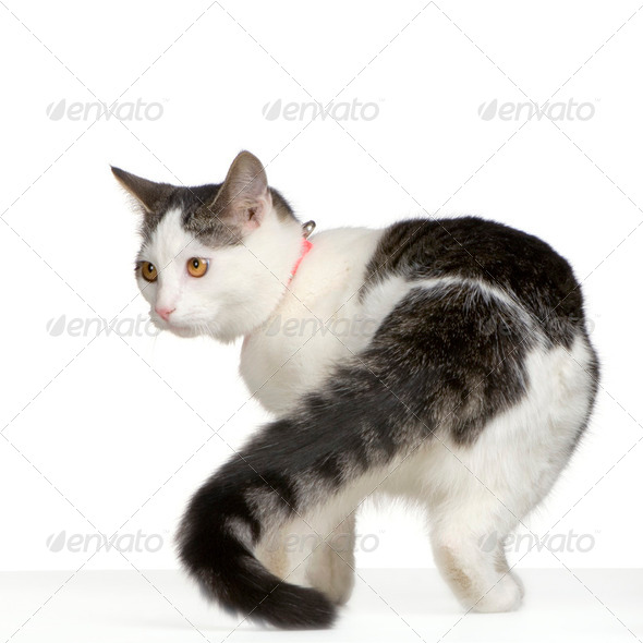 cat - Stock Photo - Images